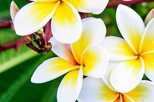 Escale \n Tahitienne